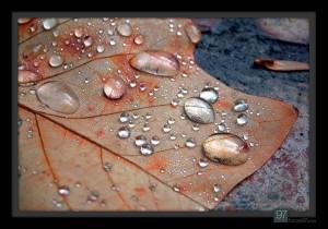 Beaded leaf