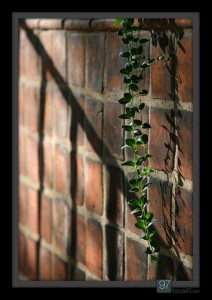 Leaves in stairwell