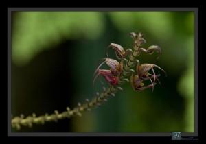 florals_013