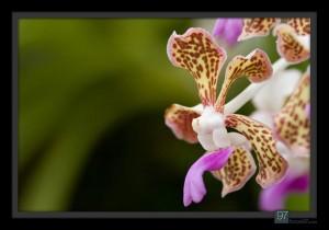 florals_014