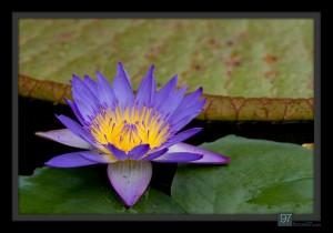 florals_016