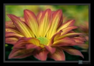 florals_018
