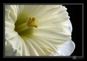 florals_021