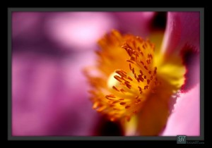 florals_022