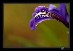 florals_023