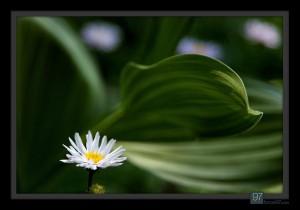 florals_025