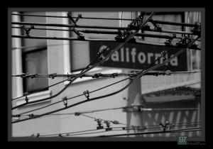 urbanWeb-California